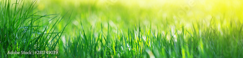 Photo sur Toile Herbe Fresh green grass background with sunlight