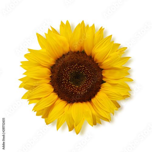 Obraz na płótnie ripe sunflower on a white background, top view.