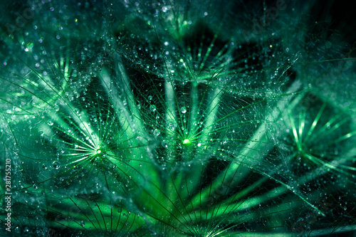 Abstract macro photo of plant seeds with water drops. Big dandelion seed - 281755210