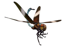 3D Rendering Widow Skimmer Dragonfly On White