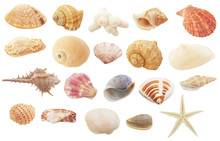 Different Seashells, Coral And...