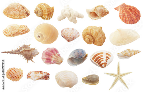 Fototapeta  Different seashells, coral and starfish  isolated on white background