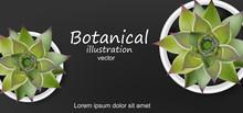 Succulents Botanical Card Vector Realistic. Green Cactus Plants. Dark Backgrounds