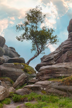 Lone Tree At Brimham Rocks