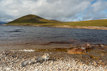 Low Water Level At Loch Glasca...