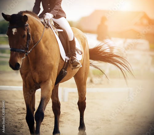 Obraz na plátně The rider rides a Bay horse in a dressage competition on the sand arena, and the horse during the gallop waved his tail