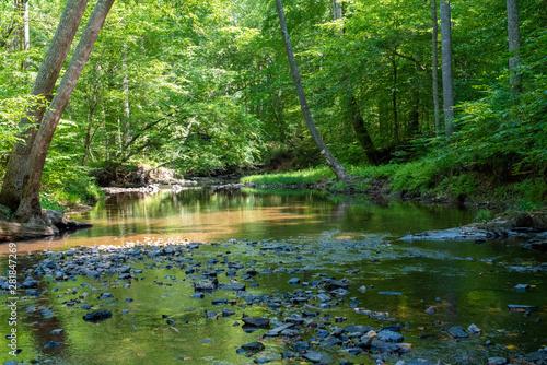 Fototapety, obrazy: Forest Stream