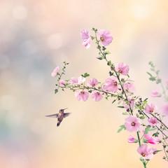 FototapetaHumming bird and Hollyhock flowers