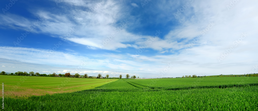 Fototapeta Scenic view of endless lush pastures and farmlands of Ireland. Irish countryside with emerald green fields and meadows. Rural landscape.
