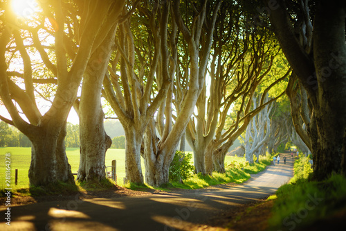 Foto auf Gartenposter Nordlicht The Dark Hedges, an avenue of beech trees along Bregagh Road in County Antrim. Tourist attractions in Nothern Ireland.