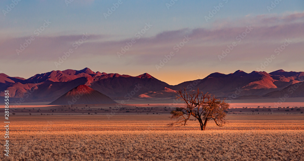 Fototapety, obrazy: Namib Rand Reserve national park at sunset - waste and sparsely populated area at the end of the desert with acacia tree