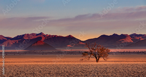 Garden Poster Africa Namib Rand Reserve national park at sunset - waste and sparsely populated area at the end of the desert with acacia tree
