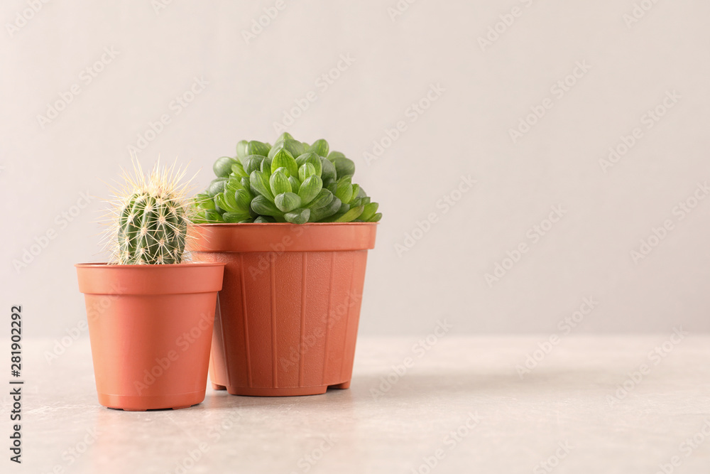 Fototapeta Beautiful succulent plants in pots on table against light pink background, space for text. Home decor