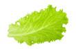 Leinwanddruck Bild - Green lettuce leaf isolated without shadow