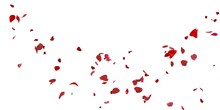 Rose Petals Flying On White Background