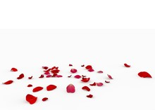 Rose Petals Fall Beautifully On The Floor
