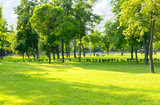 Fototapeta Na ścianę - Green summer city park background with tall trees and lawn. Sunny day in a typical european park