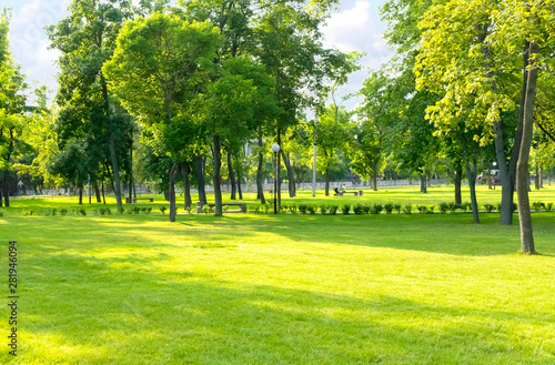 Green summer city park background with tall trees and lawn Fototapeta