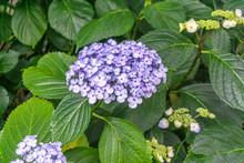 Light Purple Flowers 2