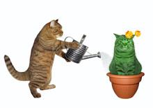 The Cat Gardener Waters An Unu...