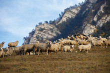 Photo Of Flock Of Sheep At Foo...