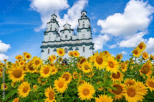Obraz Ogród słoneczników przed Kościołem Zmartwychstania Pańskiego - fototapety do salonu