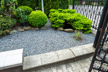 Evergreens With Gravel In The Decoration Of The Flowerbed In Landscaping