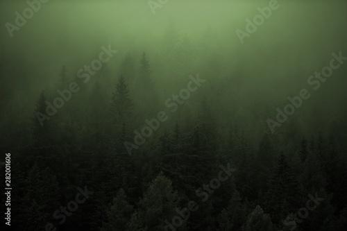 Montage in der Fensternische Olivgrun Dense Forest Foggy Weather