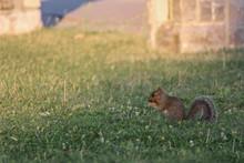 Curious And Vigilant Squirrel ...