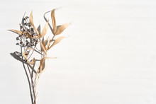 Top View Of Pastel Dry Dried Bamboo And Flower Branch Shadow On Whitebackground. Flat Lay. Minimal Summer Or Autumn Concept With Tree Leaf. Creative Copyspace.