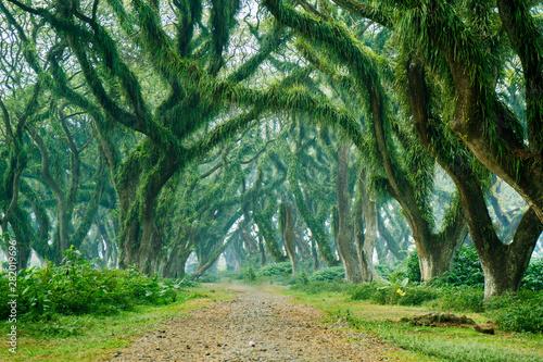 Fototapeten Wald Beautiful green trees scenery in De Djawatan forest