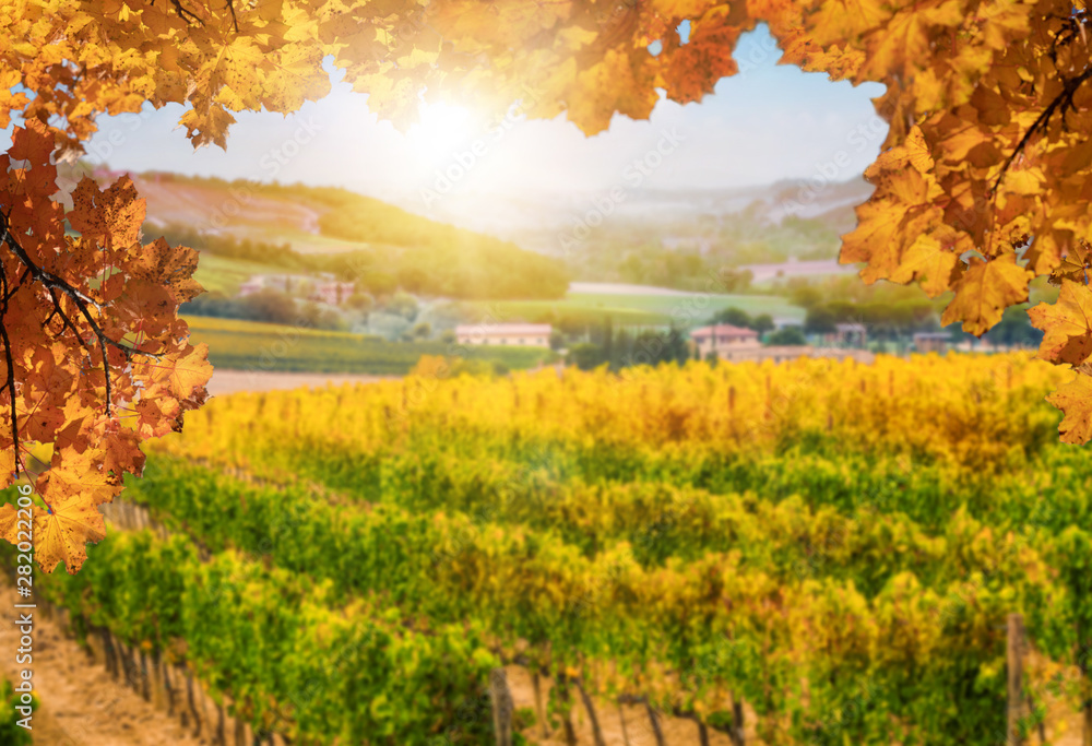 Fototapety, obrazy: Autumn leaves with blur vineyard landscape in background. Tuscany wine.