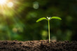 agriculture planting concept. young tree growing on soil with morning light