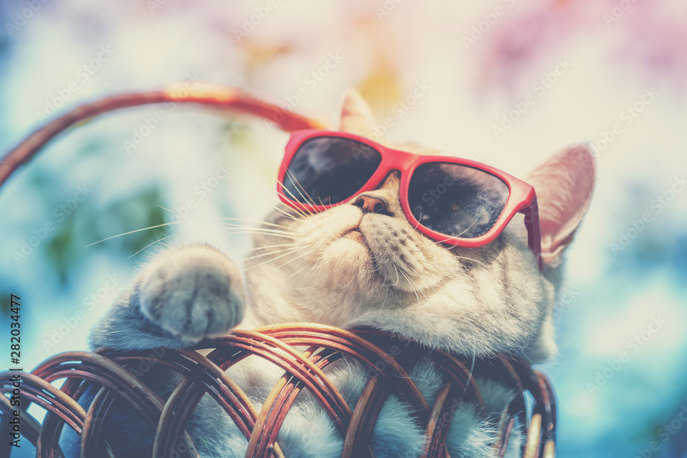 Fototapeta Portrait of a funny cat wearing sunglasses lying in a basket outdoors in summer. Cat enjoying summer and looking at the sun