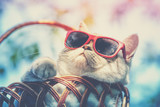 Portrait of a funny cat wearing sunglasses lying in a basket outdoors in summer. Cat enjoying summer and looking at the sun