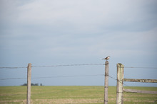 The Bird That Watches The Gate Of The Farm 05