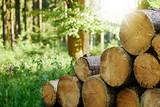 Fototapeta Sport - Gefällte Baumstämme gestapelt im Wald mit Sonnenstrahlen im Hintergrund