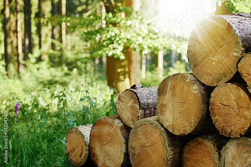 Obraz Gefällte Baumstämme gestapelt im Wald mit Sonnenstrahlen im Hintergrund - fototapety do salonu