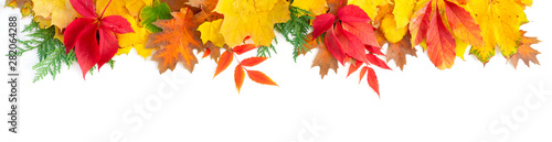 Obraz Natural fall leaves background - fototapety do salonu