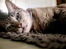 Sleepless Of Tabby Cat