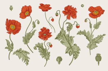Vintage vector botanical il...