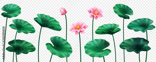 Photo  Set of isolated lotus leaves and flowers