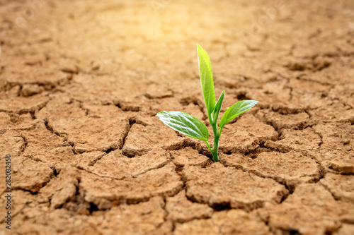Trees are growing in dry ground Concept Forest and nature conservation Slika na platnu