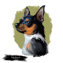 Teddy Roosevelt Terrier American Hunting Breed. Feist Bull-terrier, Smooth Fox Manchester Whippet, Italian Greyhound, Turnspit Dog, Wry-legged. Digital Art Illustration. Animal Watercolor Portrait.