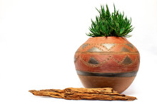 Isolated African Clay Pot With Green Succulent Plant