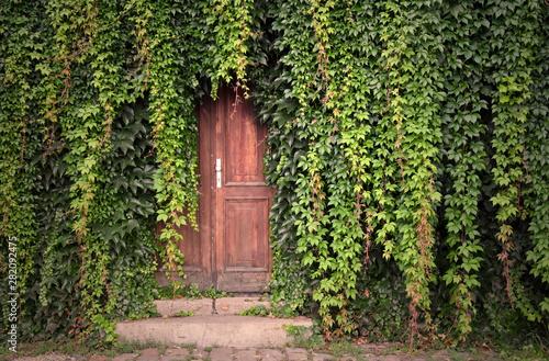 Papiers peints Jardin Door with ivy stock images. Beautiful Prague Place. Green ivy with door. Wooden door with ivy. Kampa Park in Prague. Romantic garden still life