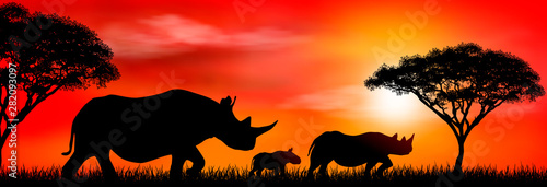 Fotografía  Group of african rhinos at sunset