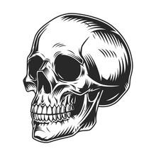 Vintage Human Skull Monochrome Concept
