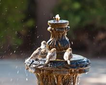 Taking A Bath: A Birdbath In A...