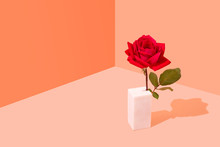 Single Red Rose Pattern On Colourful Background, Conceptual Studio Shot